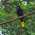 Közép-Amerika nem ehető madarai