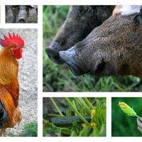 Látogatóban a Fekete Bárány biogazdaságban Balatonhenyén