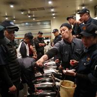 Japán tonhalárverés közvetlen közelről, élőben (videó)