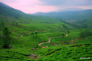 The amazing tea plantations of Munnar