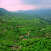 The amazing tea plantations of Munnar