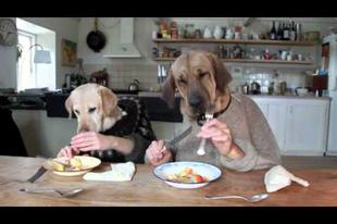 A kutya vacsorája (videó)