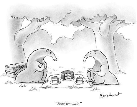 anteaters.jpg