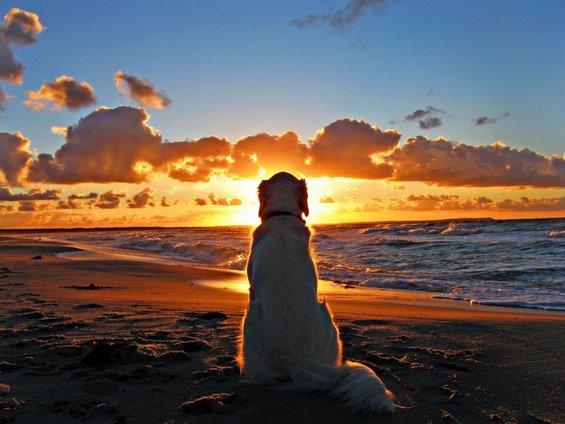 dog-and-beach-sunset-wallpaper-1024x768.jpg