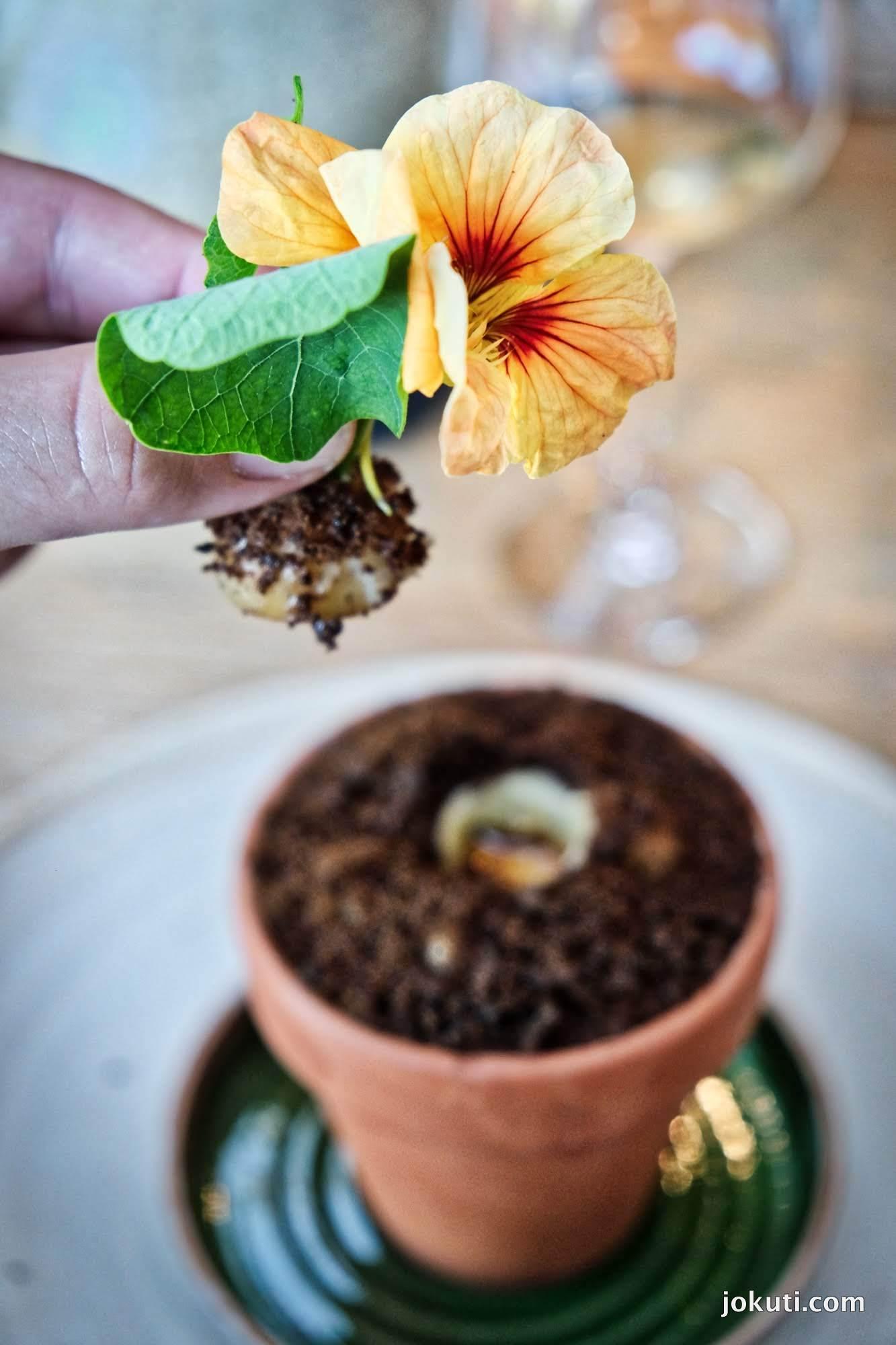 dscf6603_noma_copenhagen_vegeterian_plant_restaurant_redzepi_jokuti_vilagevo_l.jpg