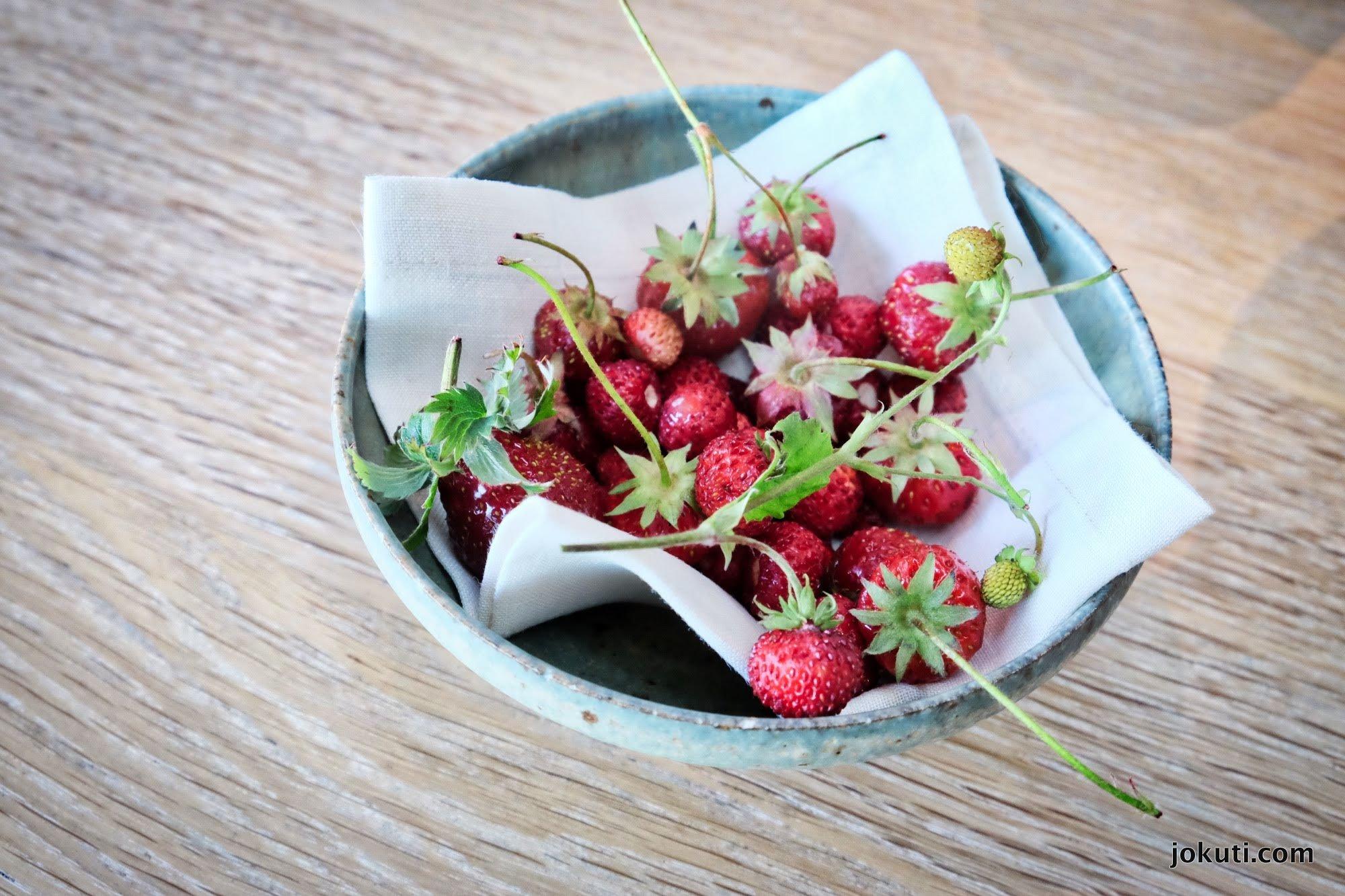 dscf6649_noma_copenhagen_vegeterian_plant_restaurant_redzepi_jokuti_vilagevo_l.jpg