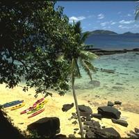 Kava a vérben -  Fidzsi-szigetek