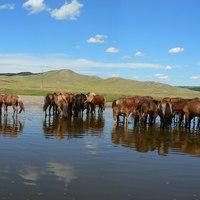 Orkhon-völgy kultúrtáj (Mongólia)