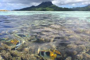 Taputapuātea (Francia Polinézia - Franciaország)