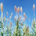 A rizsföldek romantikája - az Albufera Natural Park