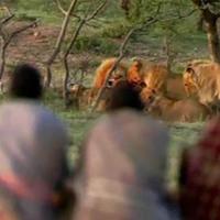 Három férfi vs. 15 éhes oroszlán