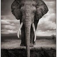 Afrika lenyűgöző vadvilága