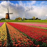 Európa virágoskertje - Keukenhof Garden
