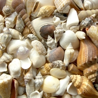 Kagylózni nem csak a tengerparton lehet