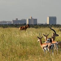 Kenya - bepillantás a vadonba