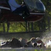 Helikopteres cowboyok Ausztráliából