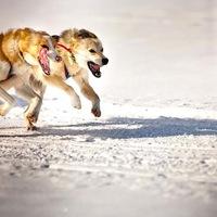 Fjällräven Polar 2013 - sarkvidéki kutyaszános expedíció magyar résztvevővel