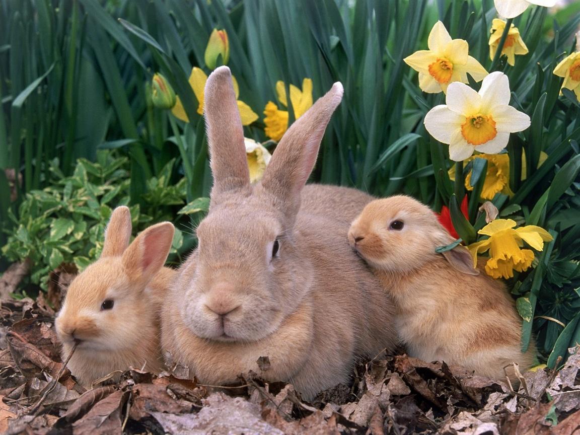 Húsvéti nyuszik.jpg