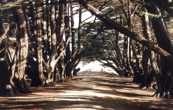 Maria Island National Park.jpg