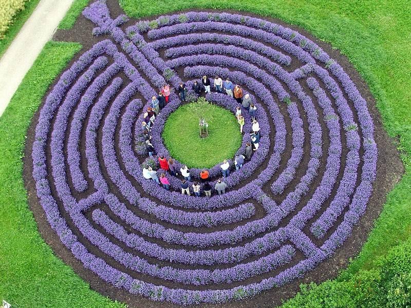 Kastellaun Germany Levendula labirintus.jpg
