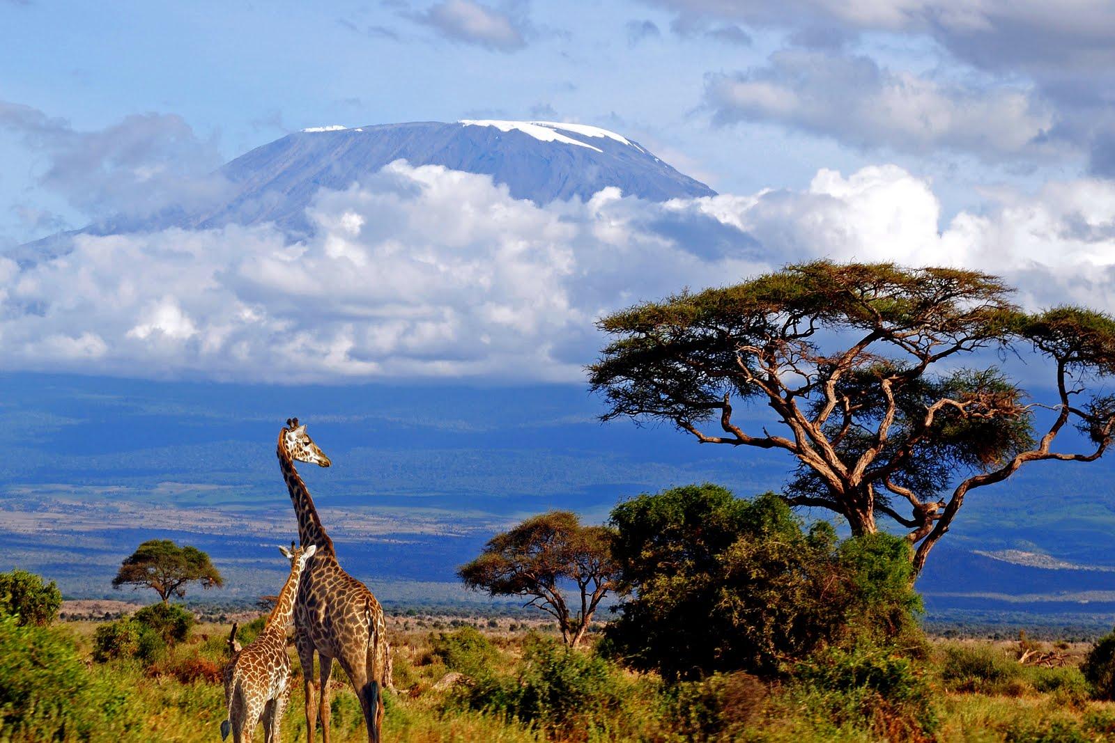 Kilimandzsáró4.jpg