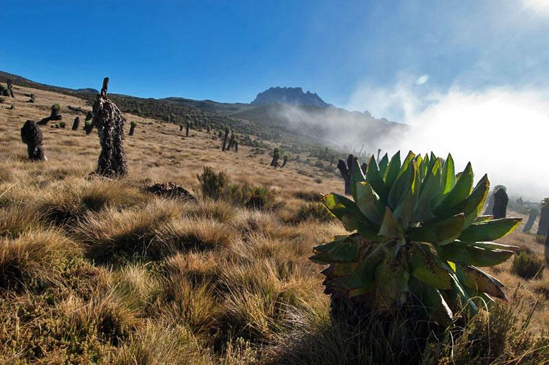 Kilimandzsáró6 (2).jpg