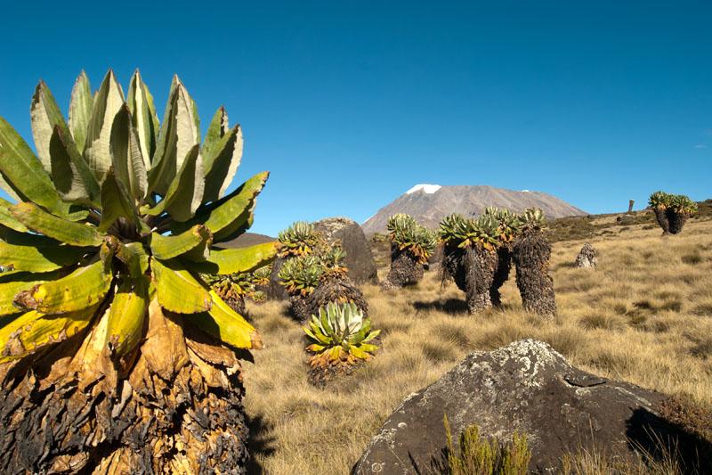 Kilimandzsáró7 (3).jpg