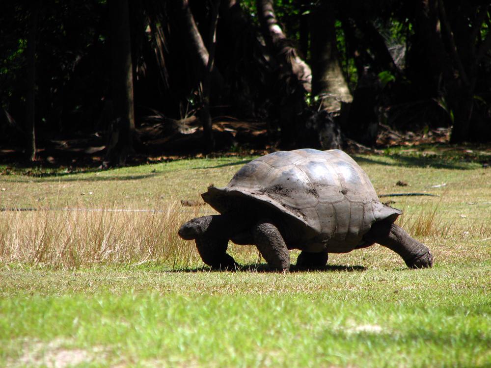 Seychelles- szigetek (12).jpg