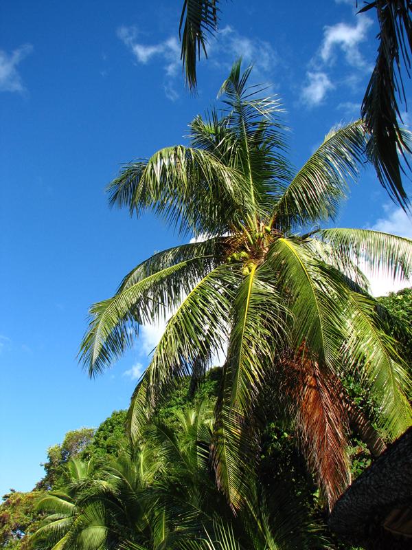 Seychelles- szigetek (7).jpg