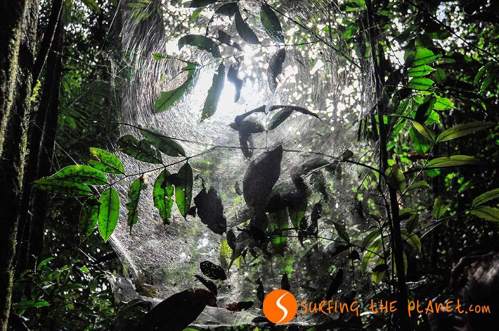 Címkép - Az amazóniai esoerdo.jpg