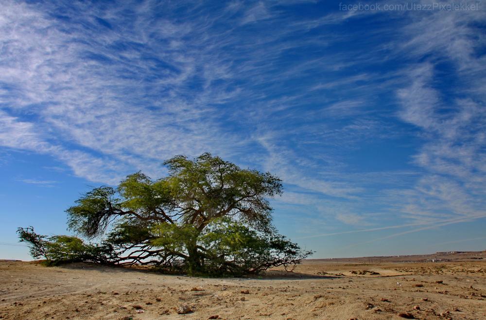 Bahrein-036.jpg