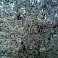 Itt a tavasz, dagad a