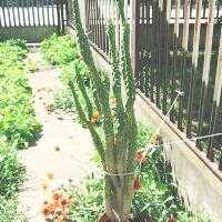 Kaktusz gondozás