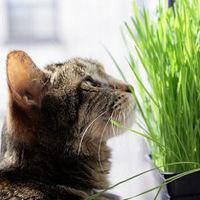 Hajlamos vagy túlöntözni a növényeid?