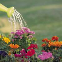 A virágok helyes öntözése