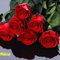 Tartósított virágok