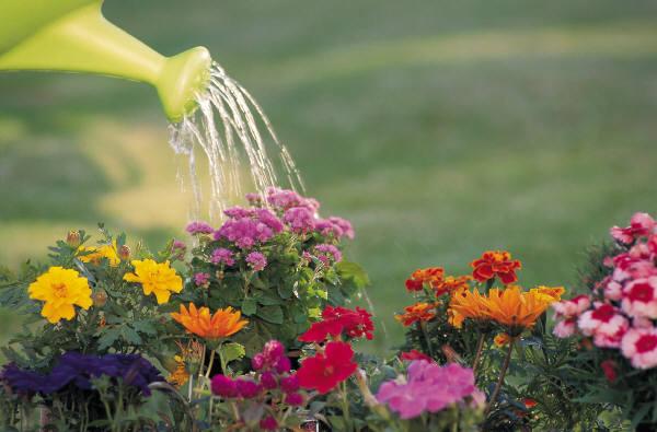 Virágok öntözése