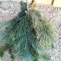 Karácsonyi manó készítése fenyőből