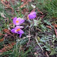 Közeleg a tavasz!