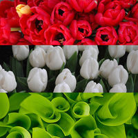 Piros, fehér, zöld