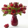 Vázányi tavasz