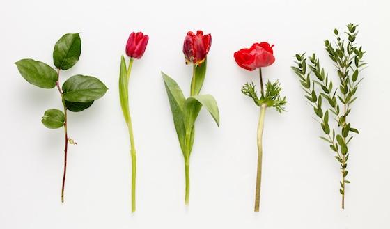 tulipan-külön.jpg