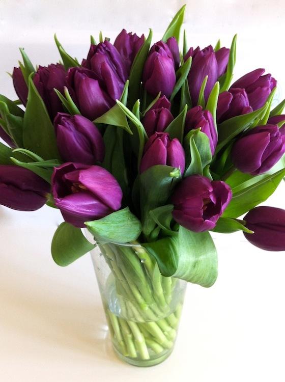 lila_tulipán.jpg