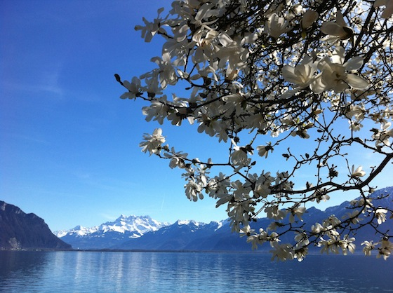 feher-magnolia-04.JPG