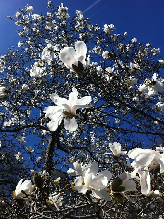 feher-magnolia-05.jpg