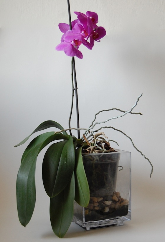 orchidea-02.JPG
