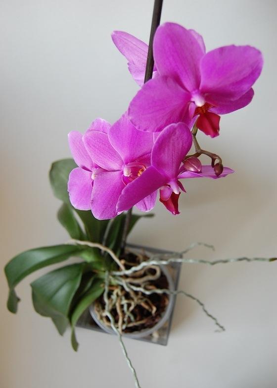 orchidea_01.jpg