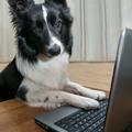 Katty, az új internet marketing tanácsadó