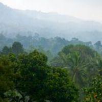 Egy vírus, amely kipusztíthatja az esőerdőket