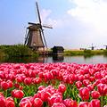 Saját magát jelentette fel a holland adatvédelmi hatóság